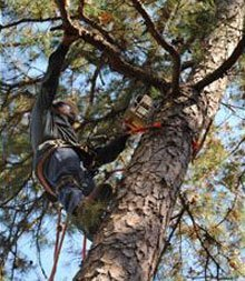 Little Rock , AR Tree Service - Tree Marshall