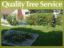 Tree Service - Pittsburgh, PA - Dave Miller Tree Removals