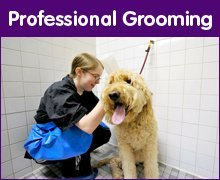 Pet Grooming - Spokane, WA - Julia's Jungle