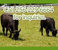 Animal Health Products - Lexington, AL - Hammond Farm Supply - Animal Health Products - Call 256-229-6664 for inquiries.