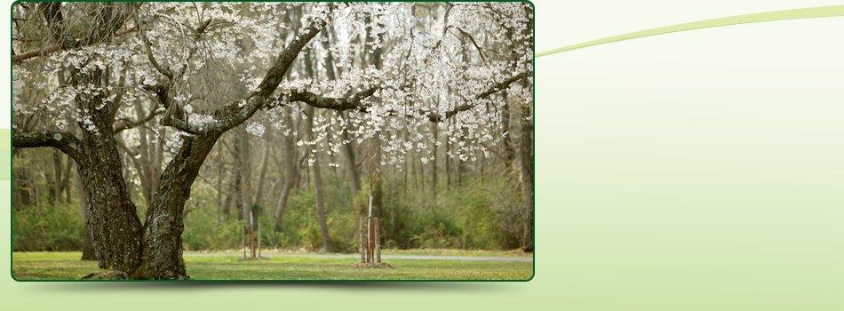 General Contractor | Big Bear , CA | AAA Tree Service | 909-584-8645