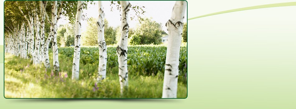 Tree Removal | Big Bear , CA | AAA Tree Service | 909-584-8645