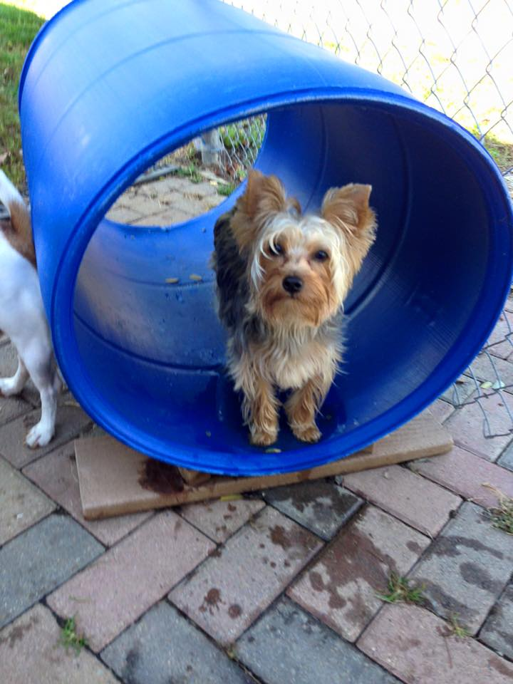 Dog and tunnel