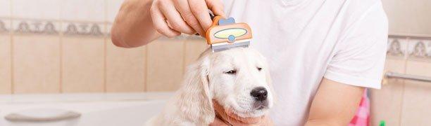 Dog brushing