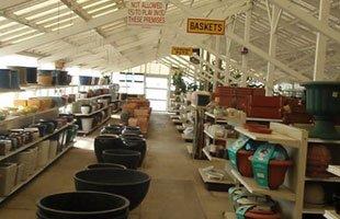 House plants | Gardena, CA | Moneta Nursery Inc | 310-324-4077