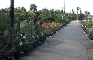 Plants  | Gardena, CA | Moneta Nursery Inc | 310-324-4077