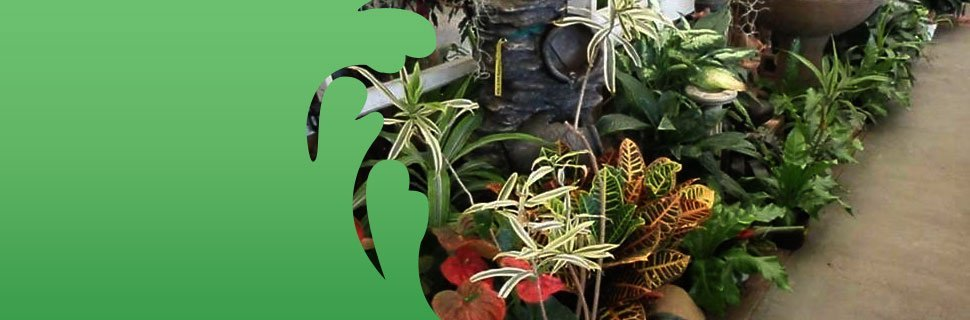 For All Of Your Plants And Flowers, Visit Moneta Nursery Inc Today