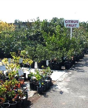 Tropical plants | Gardena, CA | Moneta Nursery Inc | 310-324-4077