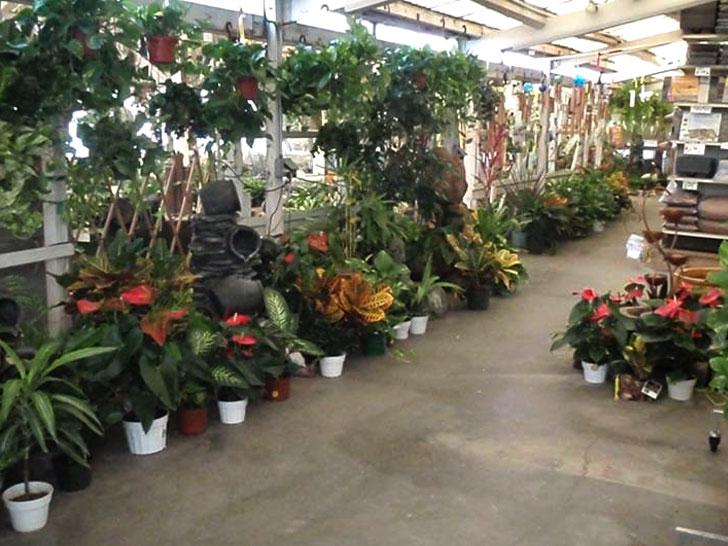 ... House Plants | Gardena, CA | Moneta Nursery Inc | 310 324 4077 ...