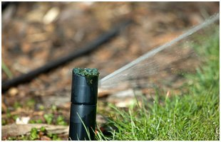 Green grass with water sprinkler