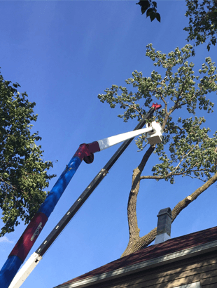 Reliable tree removal service
