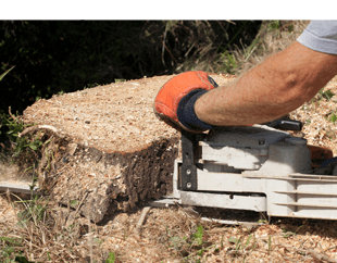 Quality bush removal