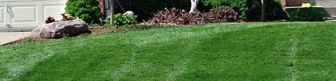 Freshly mowed lawn