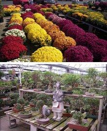 Nursery - Dayton, OH - North Dayton Garden Center & Nursery
