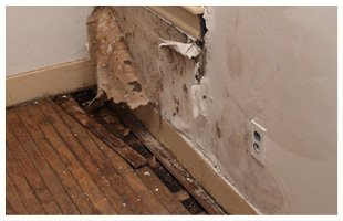 Mold & Lead Control | Terre Haute, IN | Jim Davis Restoration  | 812-234-5895