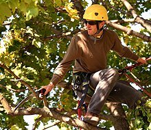 tree trimming - Winona, MN - Stetter's Tree Service - tree surgery