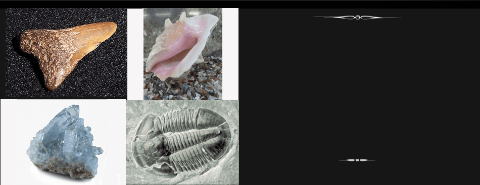 Collage images of crystals, shells and fossils