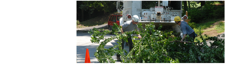 Two arborists loading up the branches of trees after pruning