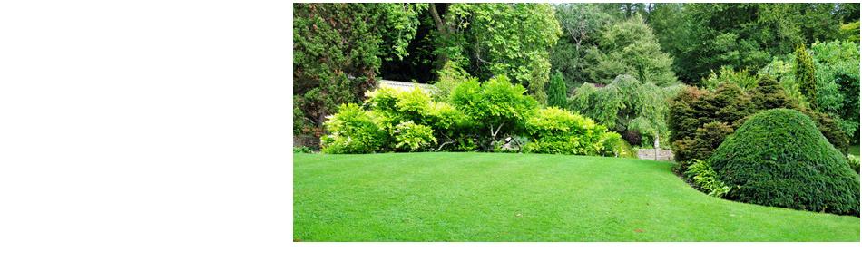 tree maintenance | Manhasset, NY | Neal's Tree Service Inc. | 516-487-5614