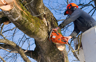 A man with a chainsaw