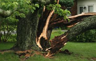 Emergency Damage Services | Manhasset, NY | Neal's Tree Service Inc.   | 516-487-5614