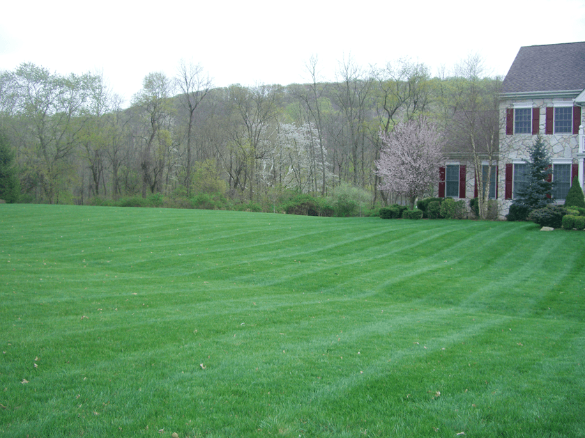 Residential lawn service
