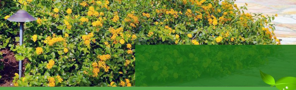 Landscaping | Austin, TX | Austin Gardeners | 512-845-1531