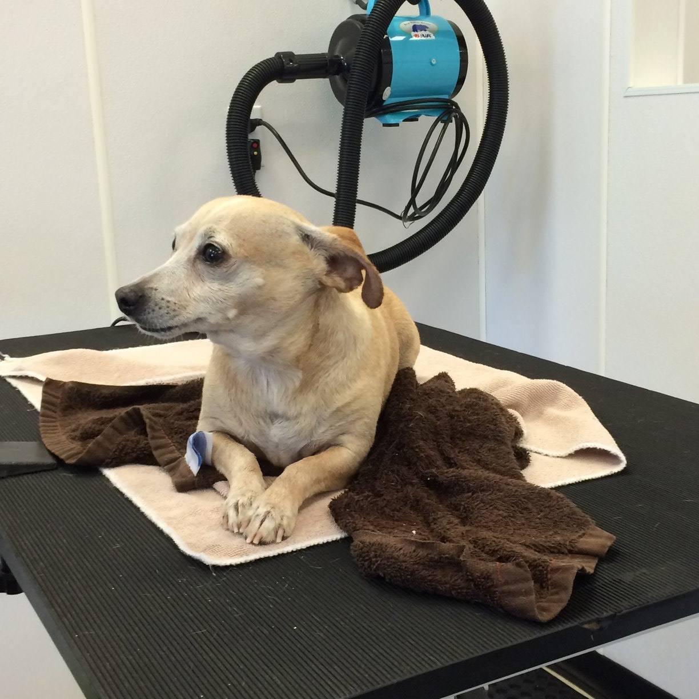 Muddy paws diy dog wash inc photo gallery vancouver wa dog wash solutioingenieria Choice Image