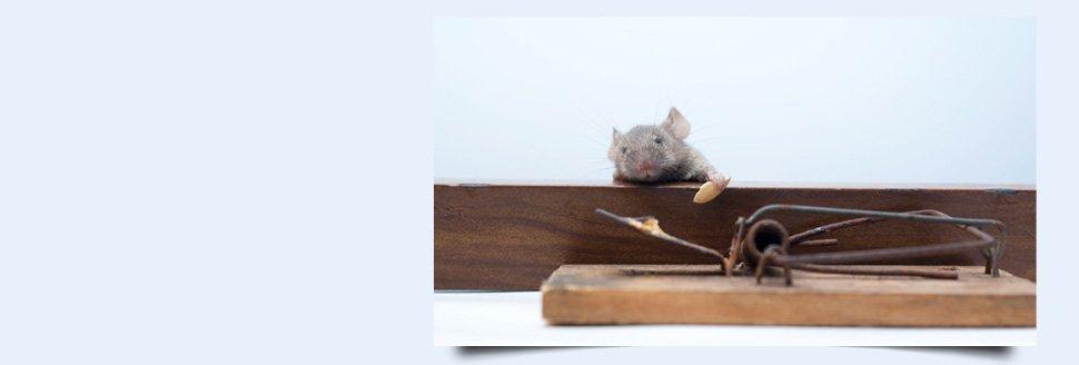 Yearly Pest Service | Easton, MD | Arnesen Pest Control | 410-820-8774