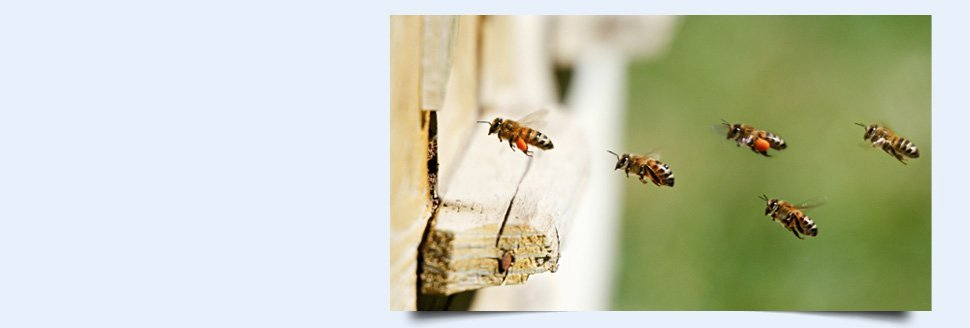 Real Estate Inspections | Easton, MD | Arnesen Pest Control | 410-820-8774