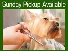 Pet Grooming Services - Green River, WY - Castle Rock Veterinary Center