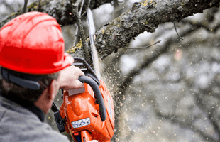 Tree Service | Chester, NY | Greenwood Tree Service | 845-469-5393