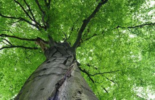 Hardscaping | Chester, NY | Greenwood Tree Service | 845-469-5393