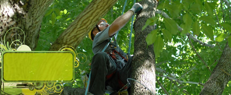 Landscaping | Chester, NY | Greenwood Tree Service | 845-469-5393