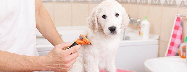 Grooming specials