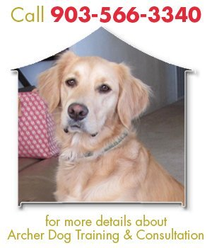 Training Dog - Tyler, TX - Archer Dog Training & Consultation - Call 903-566-3340 for more details about Archer Dog Training & Consultation