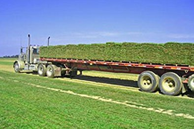Truck Carrying Turf
