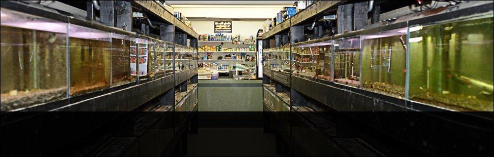 Aquariums | New York Mills, NY | Wild Things Pet Shop | 315-768-6465