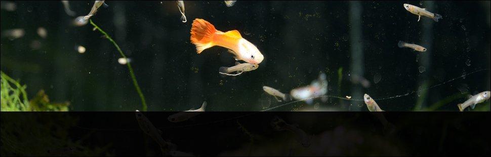 Aquarium Supplies | New York Mills, NY | Wild Things Pet Shop | 315-768-6465