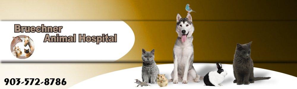 Animal Hospital - Mount Pleasant, TX - Bruechner Animal Hospital