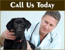 Veterinary Care - Mount Pleasant, TX - Bruechner Animal Hospital
