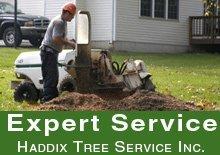 Stump Grinding - Loveland, OH - Haddix Tree Service Inc.
