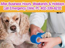 Animal Hospital - Omaha, NE - Bel-Air Animal Hospital