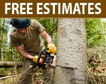 Tree Trimming And Removal - Whitehall, MI - Denny's Tree Service
