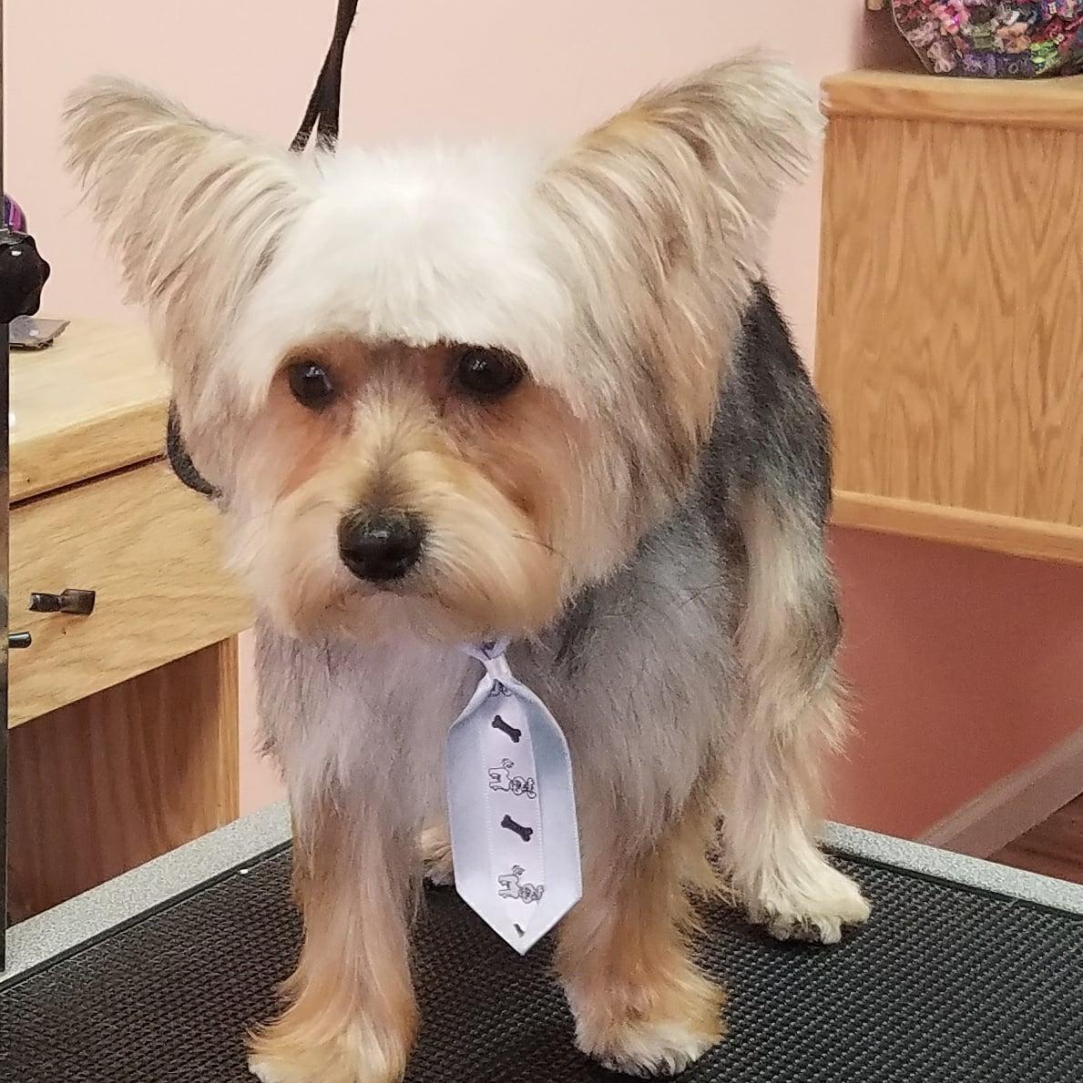 dog house pet salon