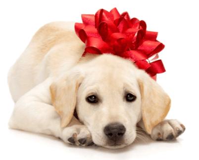 dear santa bring me a puppy