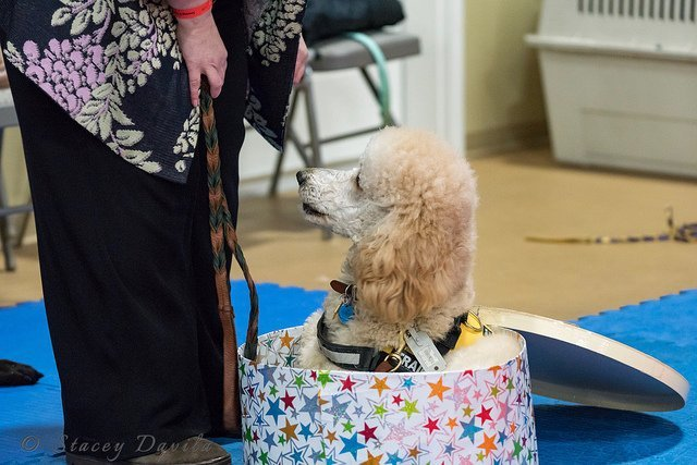 Owner-Trained Service Dogs