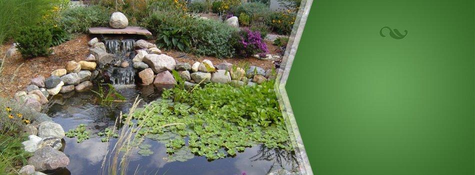 Pond and landscape design