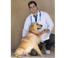 pet care - Lexington, NC - Lexington Veterinary Associates