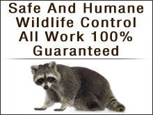 Animal Removal Service - Alta, IA - Critter Getter Wildlife Control LLC